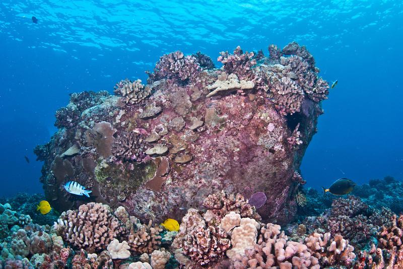 Coral Head.jpg