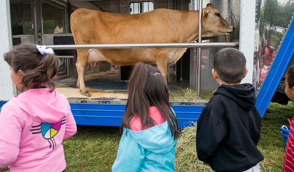 . Foster Elementary students learn all about cows and milk from the Dairy Counsel of California\'s Mobile Dairy Classroom instructor Laura LaFayette at the Baldwin Park campus April 15, 2013.   (SGVN/Staff photo by Leo Jarzomb)