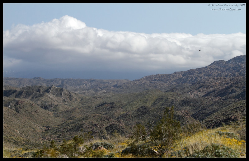Indian Canyons, Palm Springs, California, March 2011