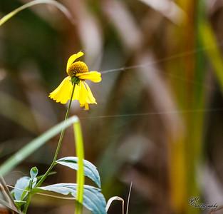 19.09.26 Tom Ridge Wetlands