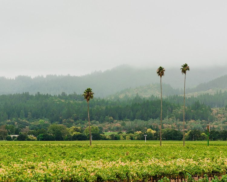 Three_Palms_Vineyard_2048-.jpg