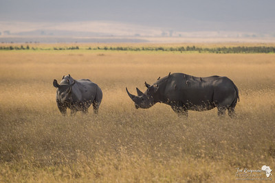 Rhino in the Grass