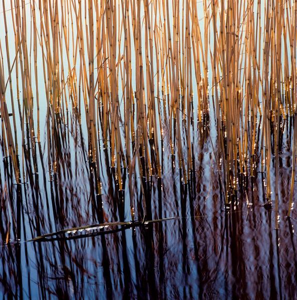 Reeds, Stockholm, Sweden, 1990