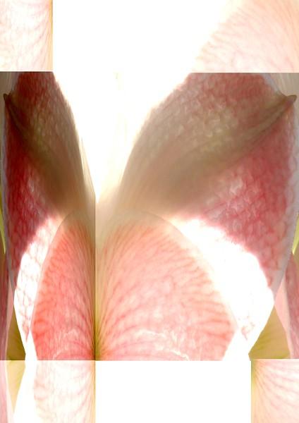 2013-05-04-Flores-63x88-B.jpg