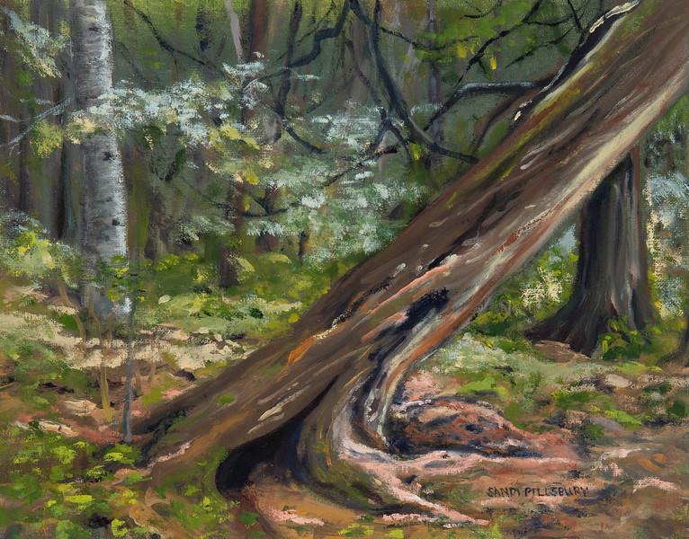 Cascade Cedars