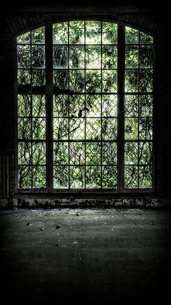 Kings Park Window 1.jpg