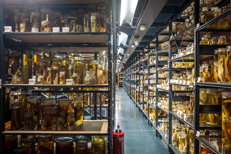 Berlin Museum of Natural History