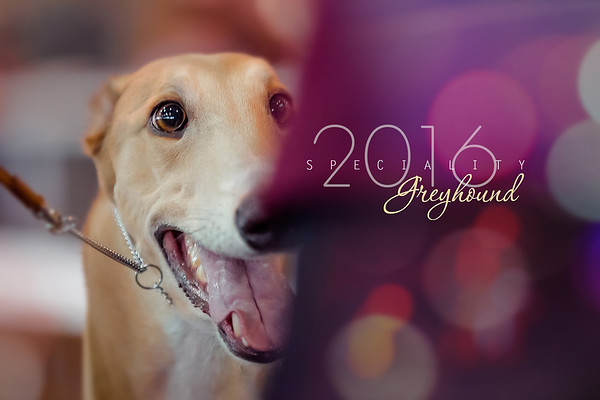 National Greyhound Show 2016