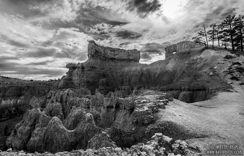 Bryce Trail - Black & White Photography by Wayne Heim