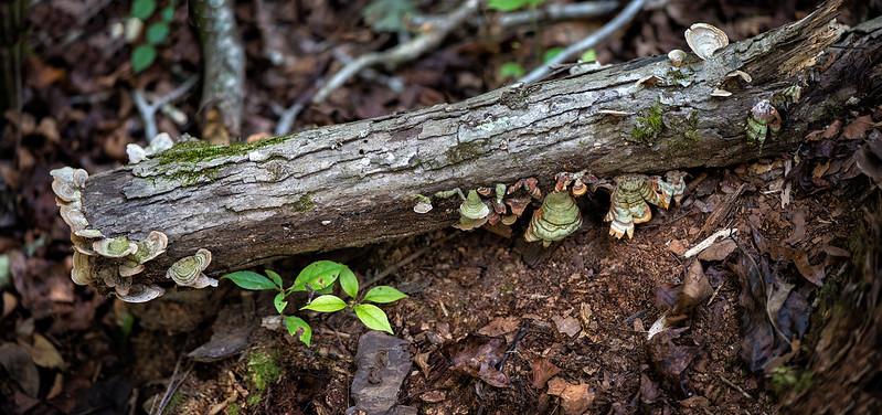 Mushroom Log_Panorama1.jpg