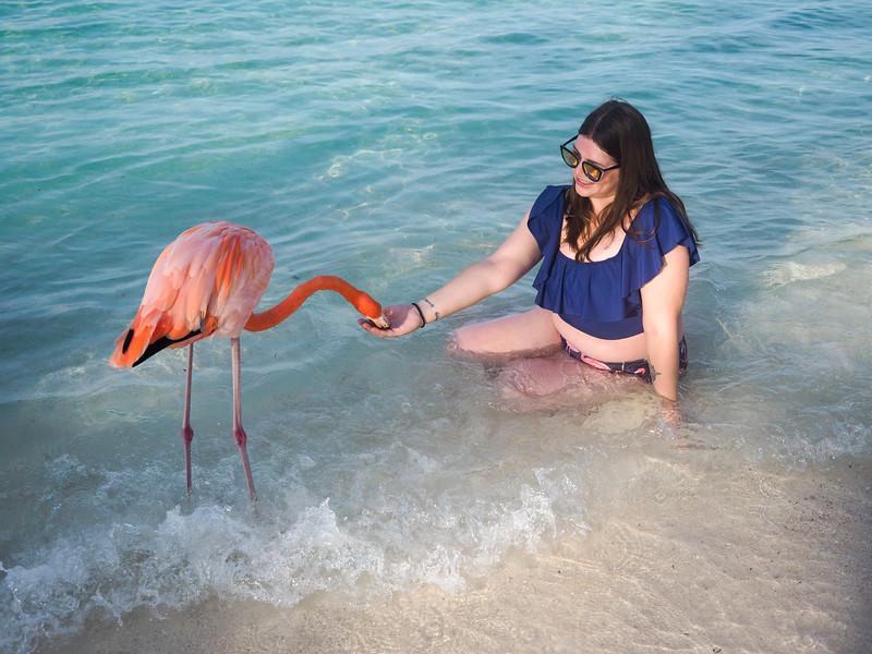 Feeding a flamingo in Aruba