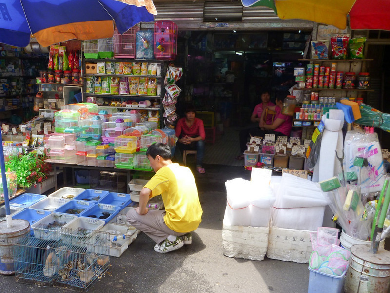 There were 3 blocks of pet store market stalls near the hotel.  Frogs, dogs, turtles, fish, mice, guinea pigs....you name it.