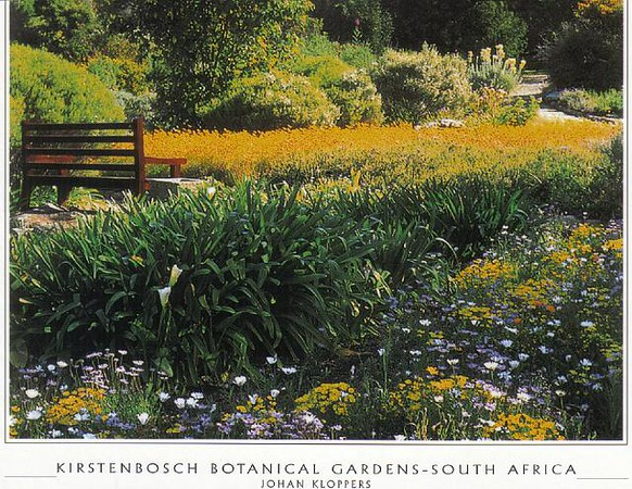 16. CT_Kirstenbosch_BG_Fantastic_floral_displays.jpg