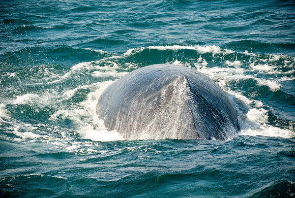 Whale Watching out from Port Stephens