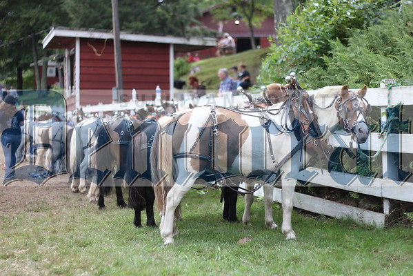Grahamsville Fair