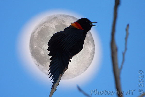 2010-02-25 Riverlands Migratory Bird Sanctuary