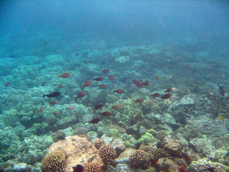 489- 20080416- Hawaii 20-Snorkelling IMG_0713.jpg