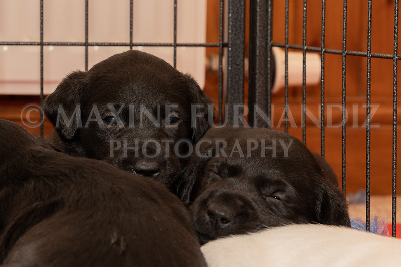 Weika Puppies 2 Mar 2019-8471.jpg