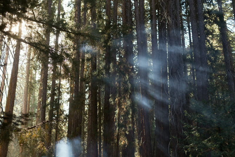 Sequoia_0513.jpg