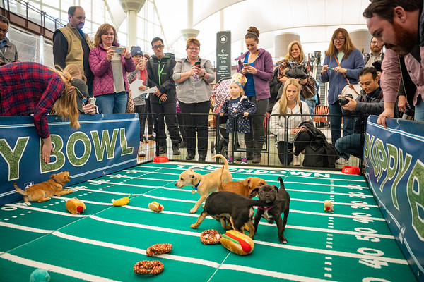 2-1-19 DEN Puppy Bowl
