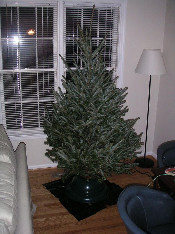 Our First Christmas Tree Dec 04