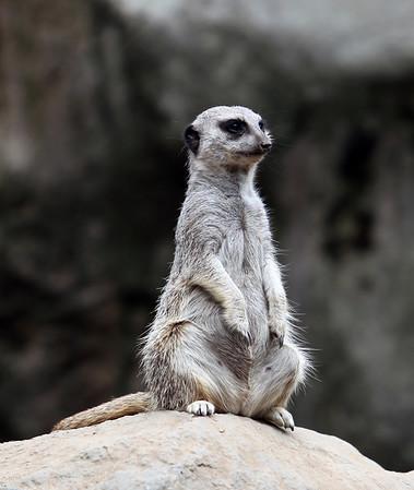 LA Zoo 2013