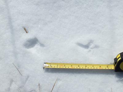 20120220 Bird and Mammal Tracks