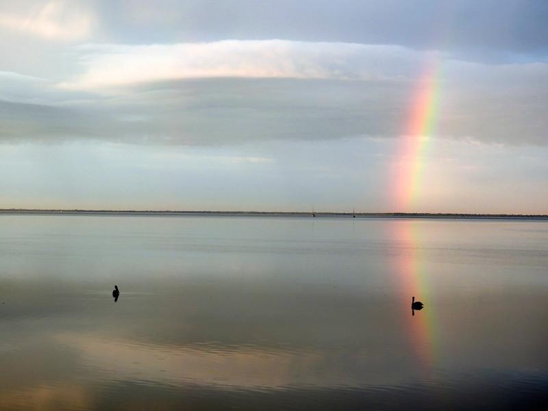2_29_20 Pelican in the Rainbow.jpg