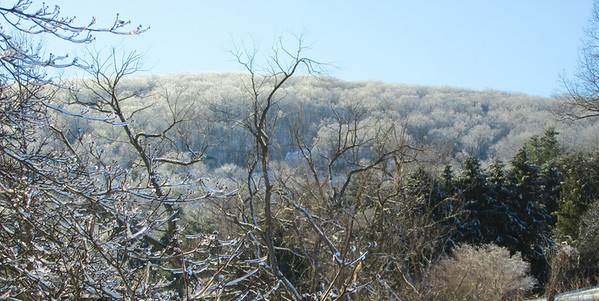 point and shoot ice storm by doug feb 2014