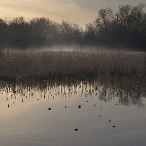 Great Swamp