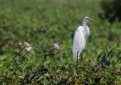 Pantanal 2015