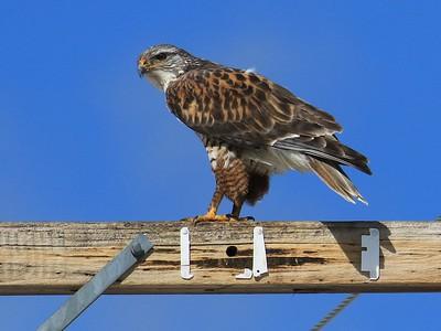 Klamath Falls eagle trip Feb March, 2019