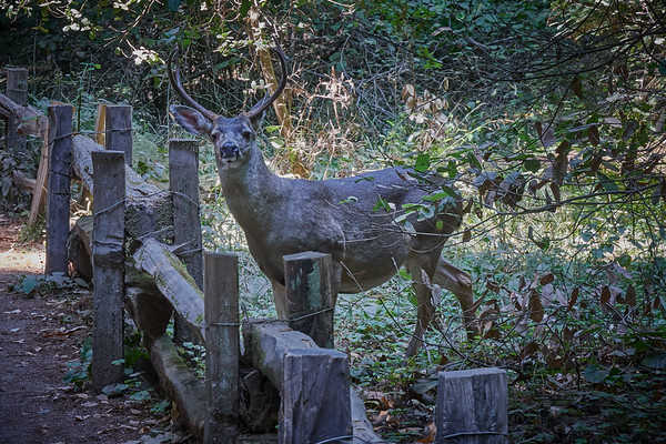 Henry Cowell State Park 2018 08 25