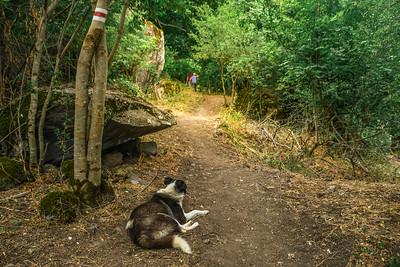 Vorotan Trails Revival