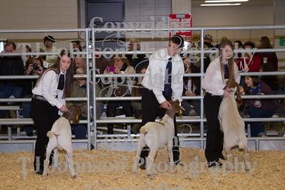 2014 KISD Livestock Show Goats Class 3