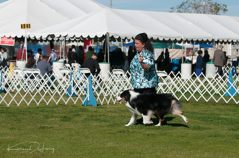 20170205_Australian Shepherds_Lost Dutchman Kennel Club-43.jpg