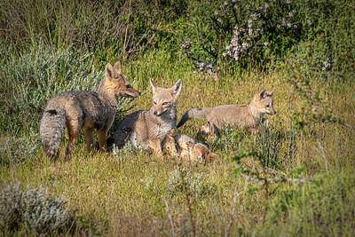 Mammals of Patagonia
