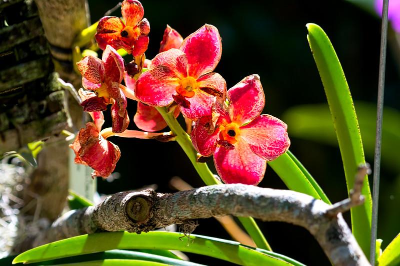 Naples Orchids