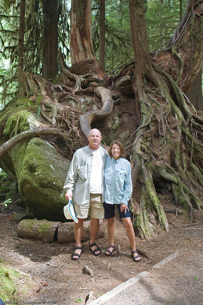 Scary tree ,Stair Case in Olympic National Park