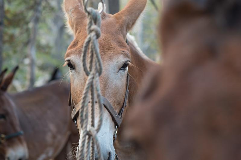 HorsepackSept2017-328.jpg
