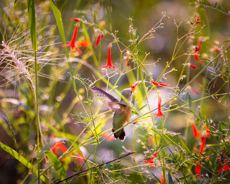20200905-Gila-Wilderness-Trip-794.jpg