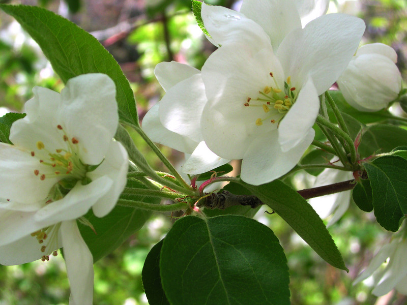white bloom73.JPG