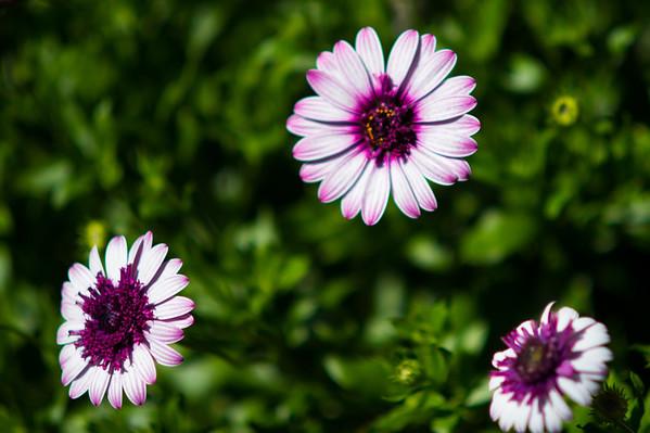 2014-04-05 Longwood inside flowers