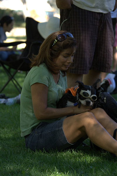 boston terrier oct 2010 068.jpg