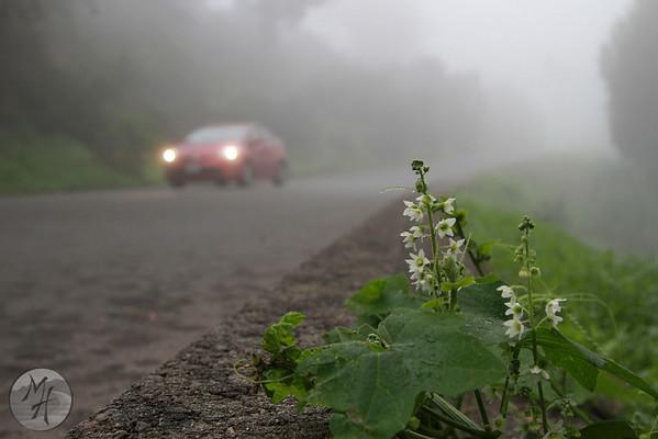 Bluebird Canyon  Fog