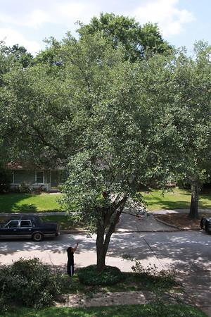 Tree Trimming 2011