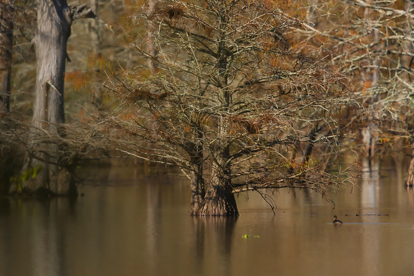 LAKE D'ARBONNE LOUISIANNA