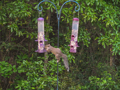 Determined Acrobatic Seed Thief