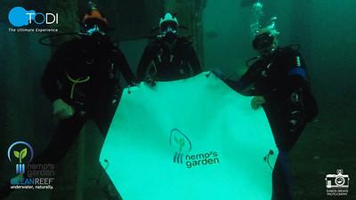 TODI Ocean Reef / Nemo Garden Experiences Aug 2020