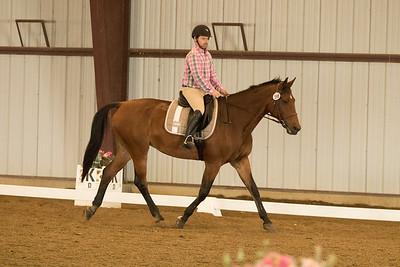 Horse 596
